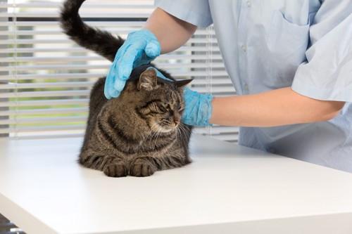 猫と獣医師
