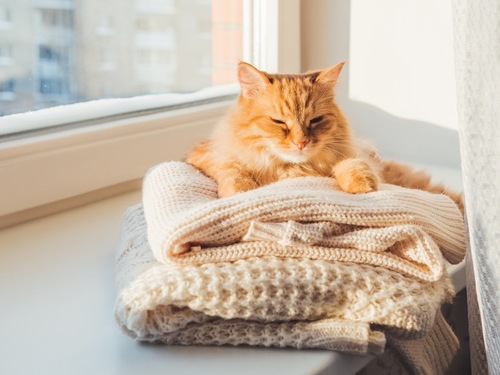 洋服の上に乗る猫