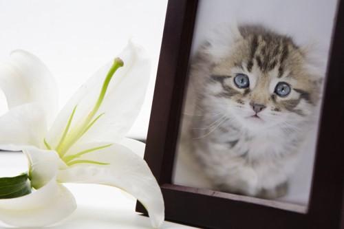 フォトフレームに入っている猫の写真