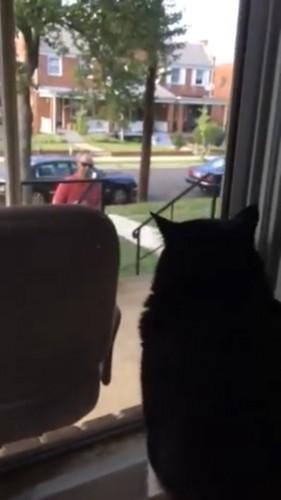 飼い主が帰ってきて一瞬喜ぶ猫
