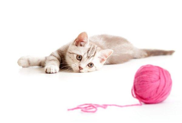 毛糸の玉を見つめる子猫