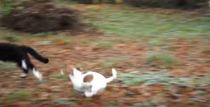 子犬から逃げる猫