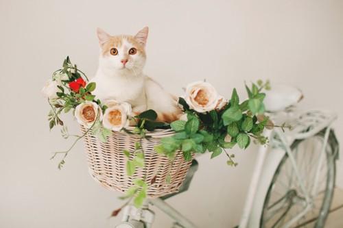 お花が飾り付けられた自転車と猫