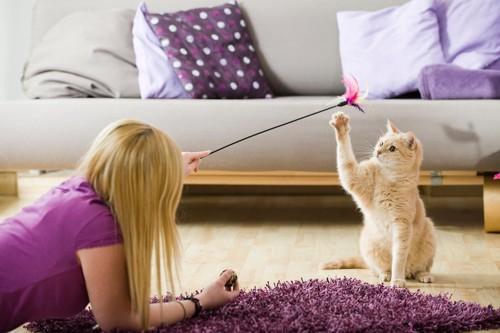 飼い主と猫じゃらしで遊ぶ猫
