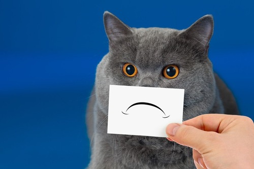 猫の口元にへの字口の紙