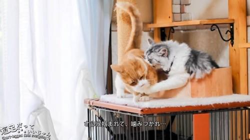 噛まれる猫