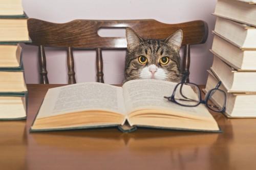 本に囲まれて座っている猫