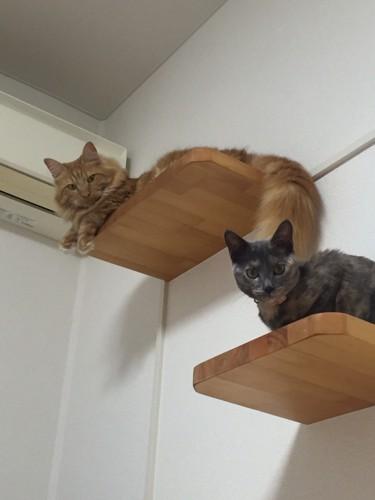 現在の愛猫たち2匹
