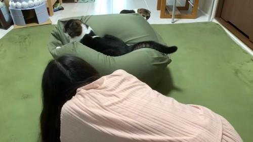 女性とクッションに乗る猫とクッションの向こう側にいる猫