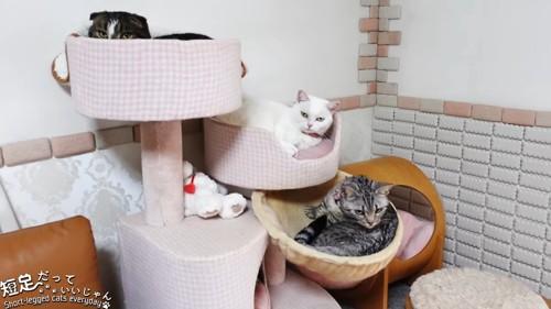 キャットタワーにいる猫たち