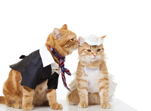 コスプレをする2匹の猫