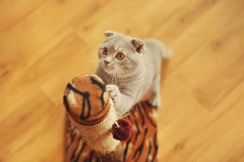 爪とぎポールに爪を研ぐ猫