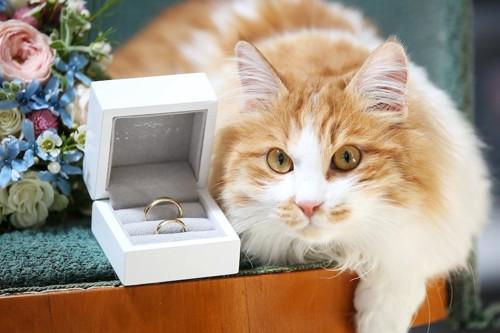 花束と結婚指輪と猫