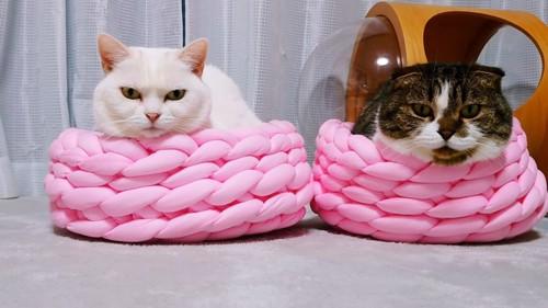 ベッドに入る猫の正面