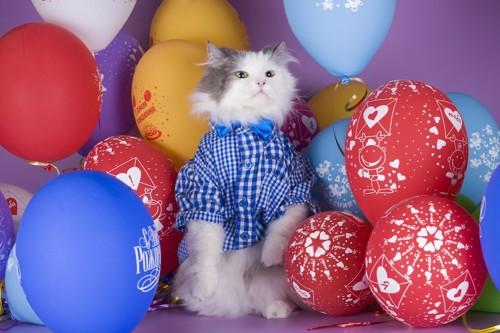 風船に囲まれて立ち上がる洋服を着た猫