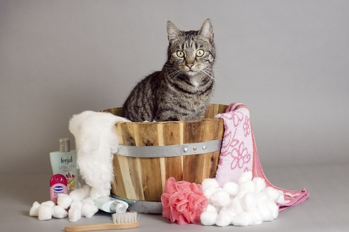 桶の中にいる猫とお風呂グッズ