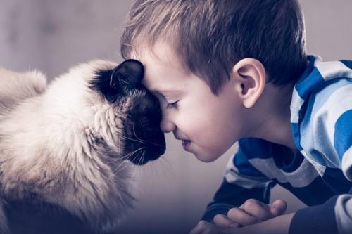 子どもとおでこをくっつける猫