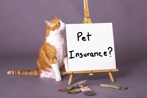 ペット保険の看板と猫