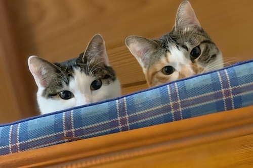 目がまんまるな2匹の猫