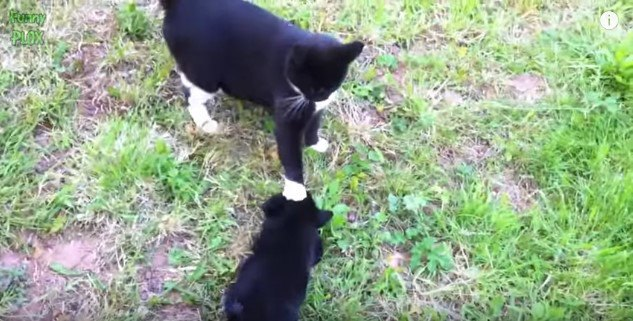 子犬の頭を押さえる猫