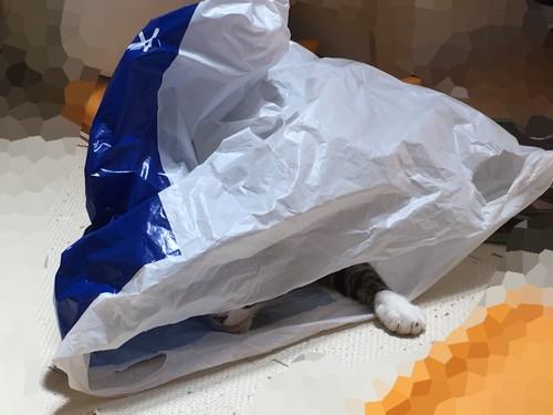 袋に入る猫