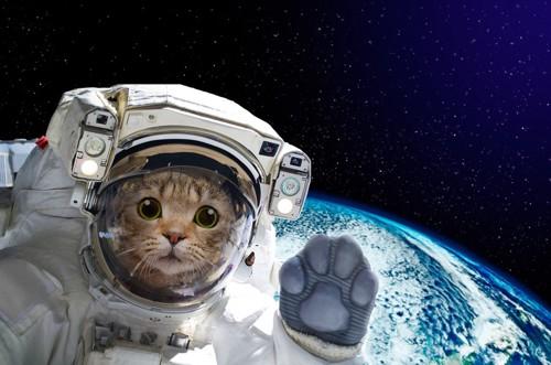 宇宙飛行士になった猫