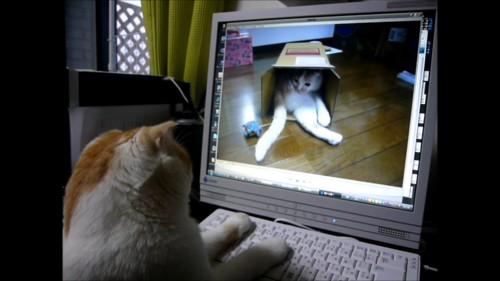 キーボードに前足を置く猫