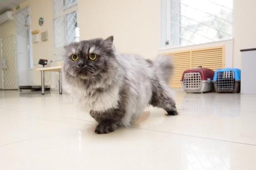 ケージから逃げる猫