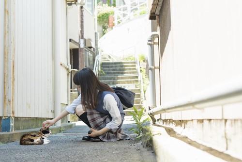 しゃがんで野良猫を撫でる女子高生