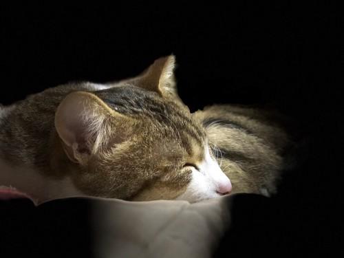 寝ている猫を下から照らしたような写真
