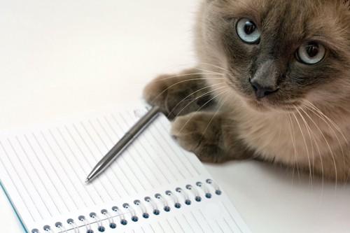 ノートに手を置いた猫