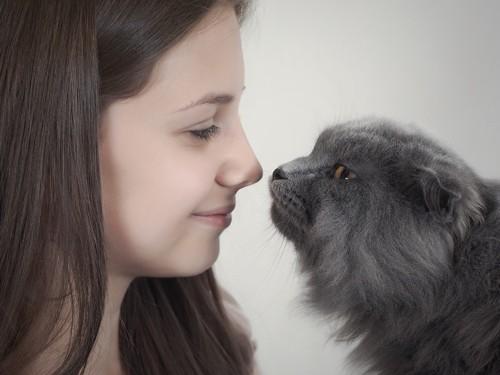 顔を近づける猫と女性