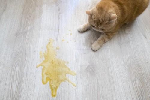 嘔吐物と猫