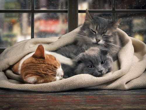 窓際の布団にくるまる猫3匹