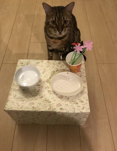 食器台と猫