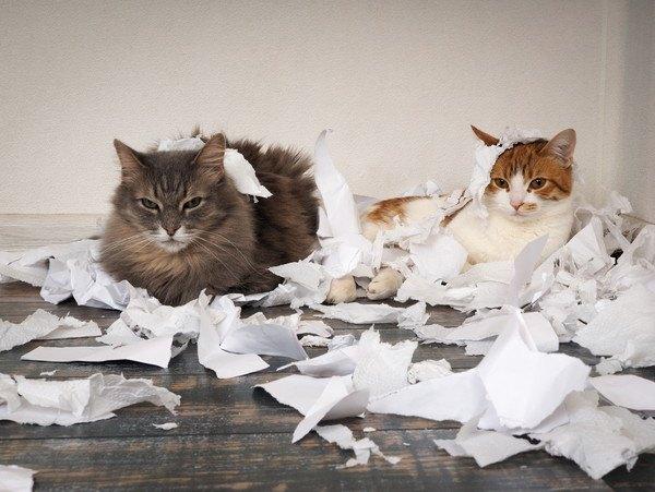 ボロボロにされたトイレットペーパーと二匹の猫