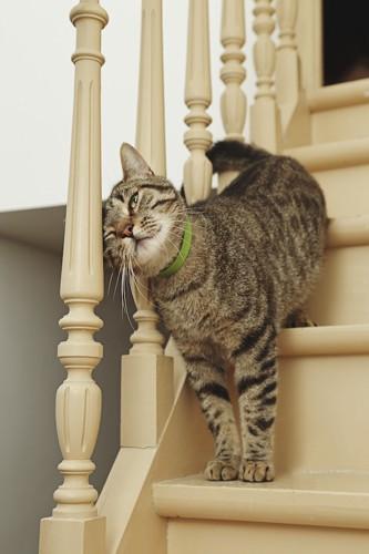 階段の手すりに顔をこすりつける猫