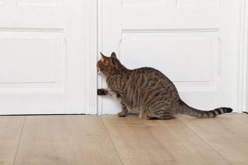 ドアから脱走を狙っている猫