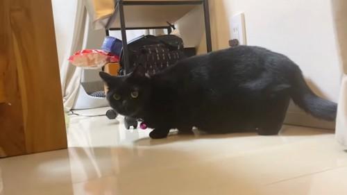 体を小さくしている黒猫