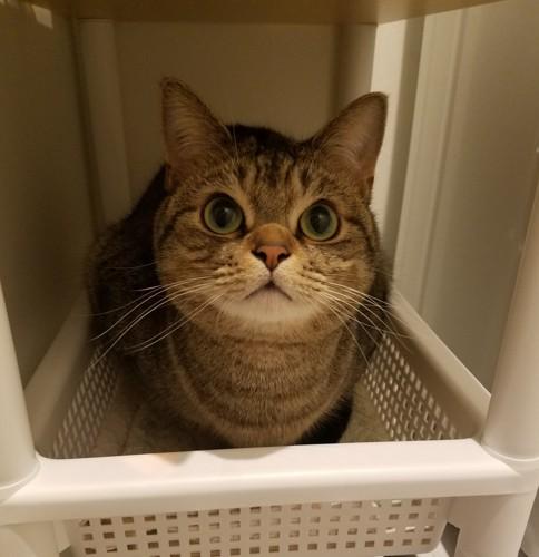 タオル入れに入る猫