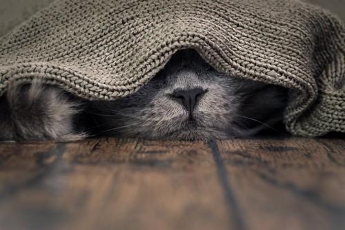 隠れて寝る猫