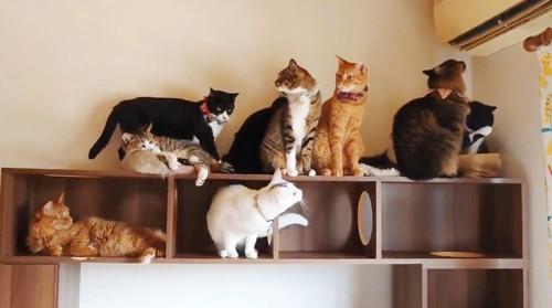 冷風を堪能する猫たち
