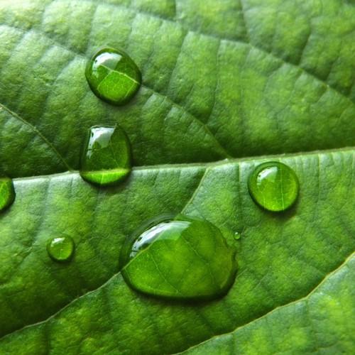 水をはじく緑の葉