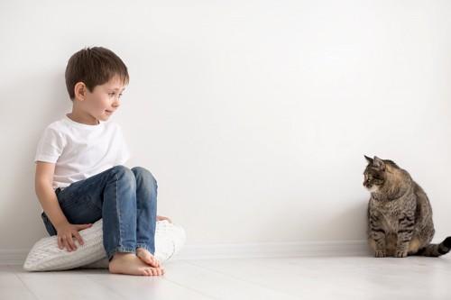 少年と見つめ合う猫