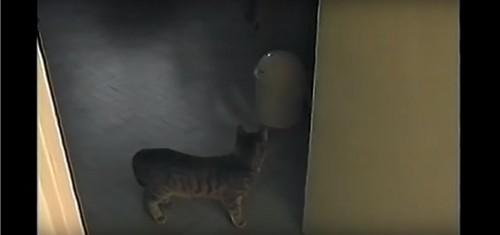 ゴミ箱を見つめる猫