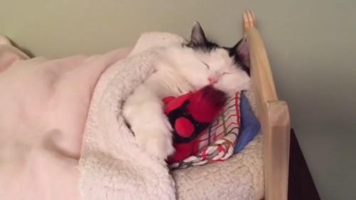 二度寝する猫