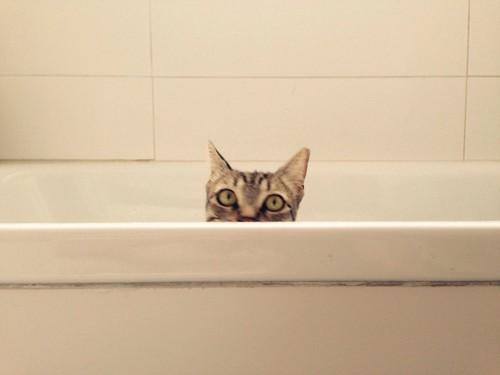 風呂桶から覗く猫