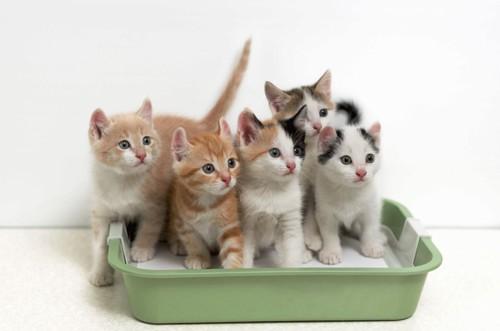 複数の子猫とトイレ