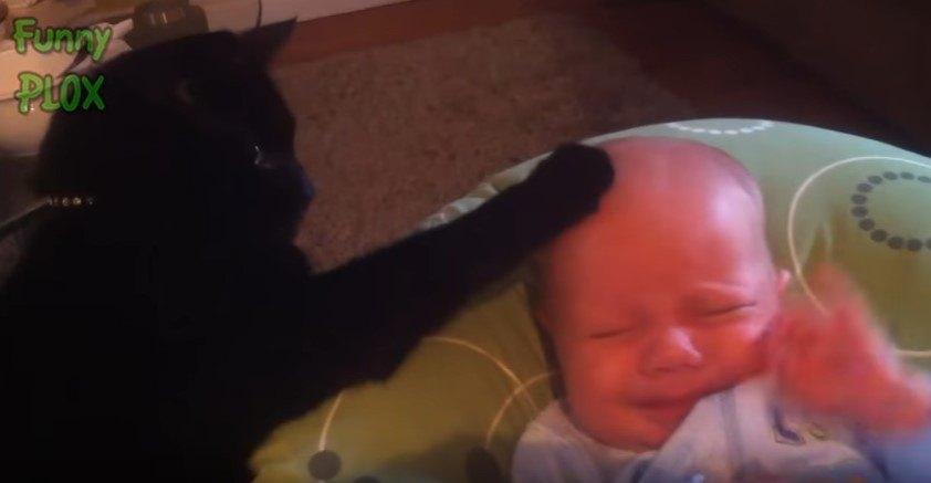 乳児の額に前足を置く猫