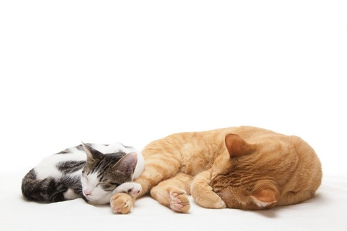 共に寝る猫